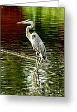 Heron On The Stick Greeting Card