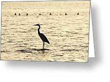 Heron Standing In Water Greeting Card