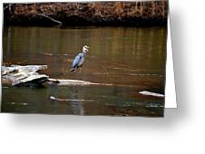 Heron Talking Greeting Card