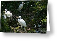 Heron Trio Greeting Card