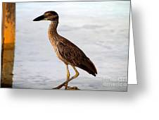 Heron Under The Dock Greeting Card