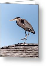 Heron Up On The Roof Greeting Card