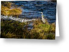 Heron Watchful Eye Greeting Card