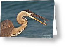 Heron With Catch Greeting Card