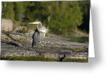 Heron With Corkscrew Neck Greeting Card