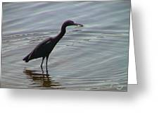 Heron With Fish Greeting Card