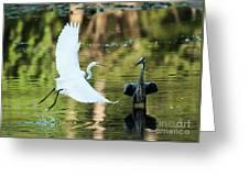 Herons Greeting Card