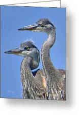 Herons On The Lookout Greeting Card