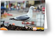 Herring Gull At The Harbour Greeting Card