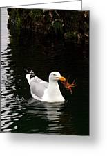 Herring Gull With Crab Greeting Card