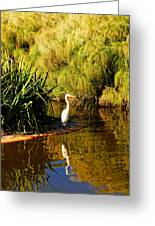 Herron Greeting Card