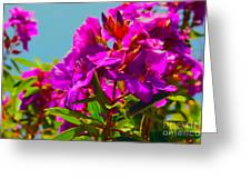 Hervey Bay Flowers Greeting Card