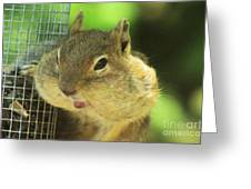 Hey Check Out My Big Cheeks Greeting Card