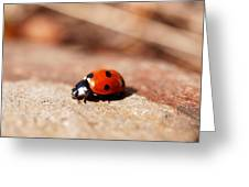 Hey There Little Lady Bug Greeting Card
