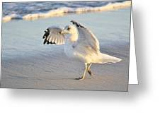 Hey Wait - Sea Gull Greeting Card