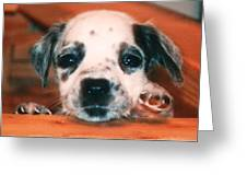 Dalmatian Sweetpuppy Greeting Card