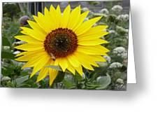 Hi Dive Bee Greeting Card by Christine Burdine
