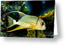 Hi Fin Snapper Greeting Card