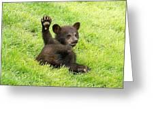 Hi Five Bear Greeting Card