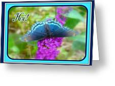 Hi Hello Greeting Card - Red Spotted Purple Butterfly Greeting Card