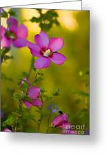 Hibiscus 01 Greeting Card