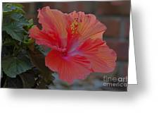 Hibiscus 1 Greeting Card