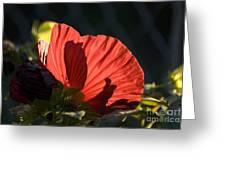 Hibiscus 10 Greeting Card