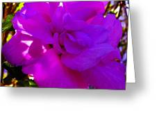 Hibiscus 4 Greeting Card