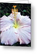 Hibiscus 41 Greeting Card