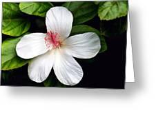 Hibiscus 54 Greeting Card
