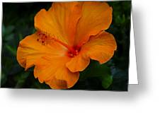 Hibiscus 9 Greeting Card