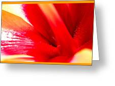 Hibiscus Abstract In Red And Yellow Greeting Card
