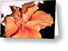 Hibiscus At Sunset Greeting Card