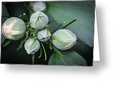 Hibiscus Buds Greeting Card