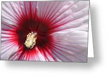 Hibiscus-callaway Gardens Greeting Card
