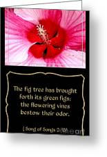 Hibiscus Closeup With Bible Quote From Song Of Songs Greeting Card