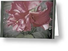 Hibiscus Dream Greeting Card