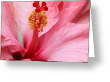 Hibiscus Flower Close Up Greeting Card