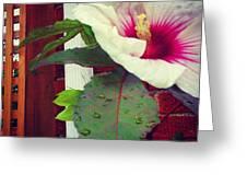 Hibiscus Flower In Bloom Greeting Card