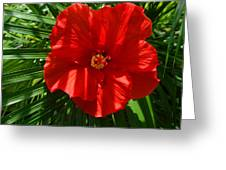 Hibiscus Good Morning Greeting Card