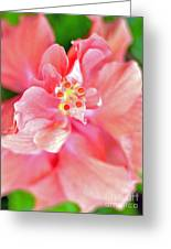 Hibiscus II Greeting Card