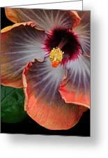 Hibiscus Key Largo Greeting Card