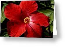 Hibiscus Landscape Greeting Card