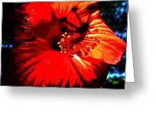 Hibiscus Greeting Card by Mark Malitz
