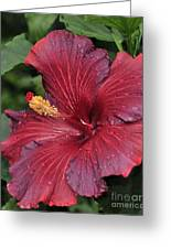 Hibiscus Night Fire 2 Of 2 Greeting Card