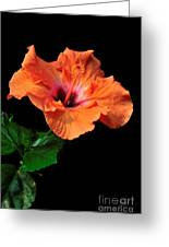 Hibiscus On Black - One Greeting Card