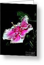 Hibiscus On Black - Three Greeting Card