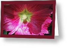 A Hibiscus Discovered On Boston Common Greeting Card
