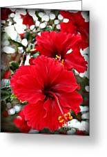 Hibiscus Perspective Greeting Card