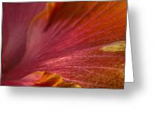 Hibiscus Petals Greeting Card